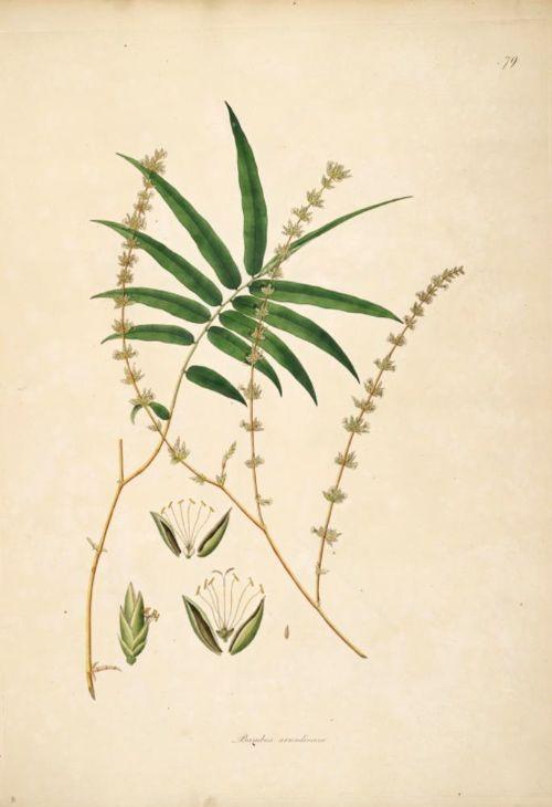 bamboo drawing - photo #30