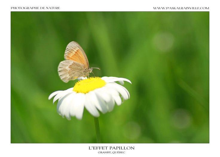 L'effet papillon Prise à Granby, Québec, Canada http://www.paskalrainville.com/