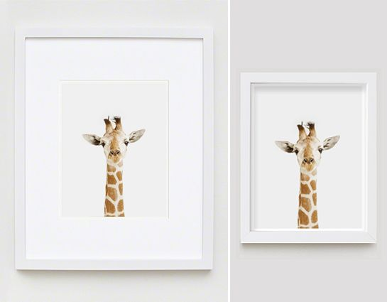 Giraffe Close-up - The Animal Print Shop by Sharon Montrose  $25 for 8x10 // $75 for 11x14