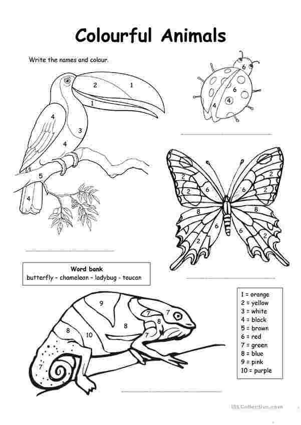 Esl Coloring Pages In 2020 Malen Nach Zahlen Malvorlagen Tiere Malen