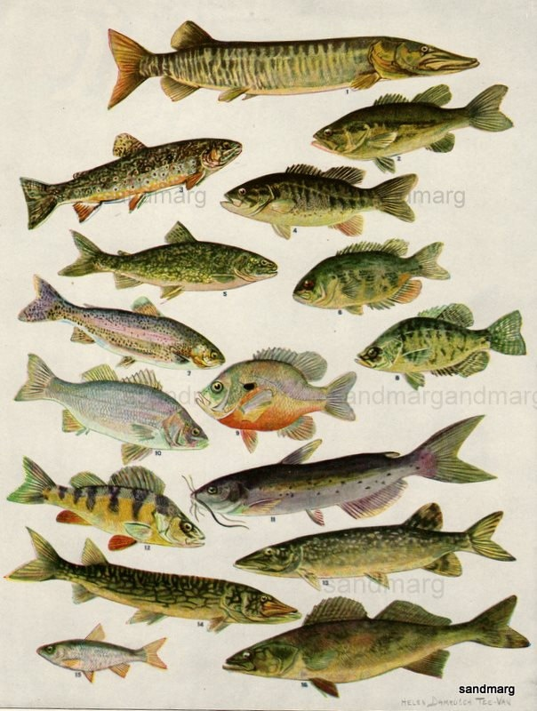 66 best freshwater fishing illustrations images on for Freshwater fishing games