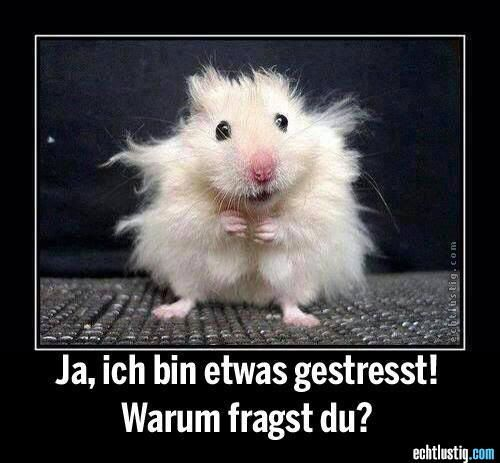 yes, I'm a little stressed, how did you know? - gestresster hamster