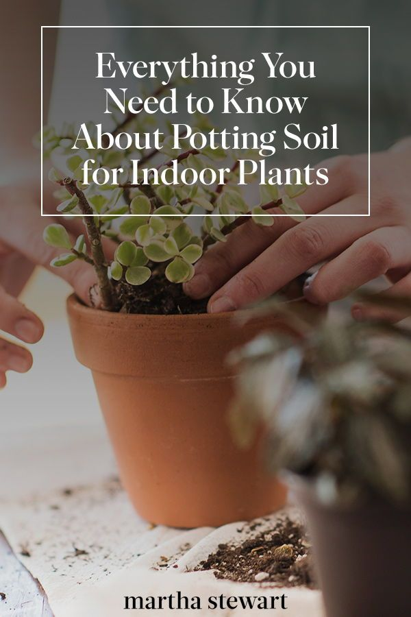 Everything You Need To Know About Potting Soil For Indoor Plants Indoor Plants Potting Soil House Plant Pots