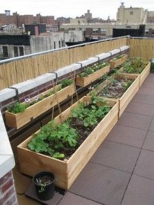 Planting a Roof Garden