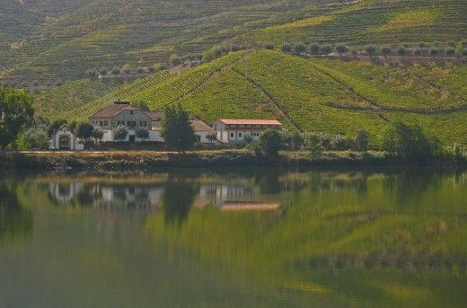 Vineyards along the Douro river in Portugal
