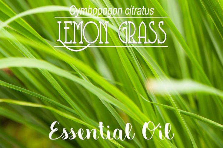 Online Shop | Lemon grass Essential Oil in South Africa | Oh deer! Studio