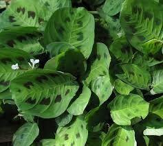 Resultado de imagen para plantas de interiores resistentes
