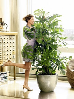 17 best images about plants in the living room on Large living room plants