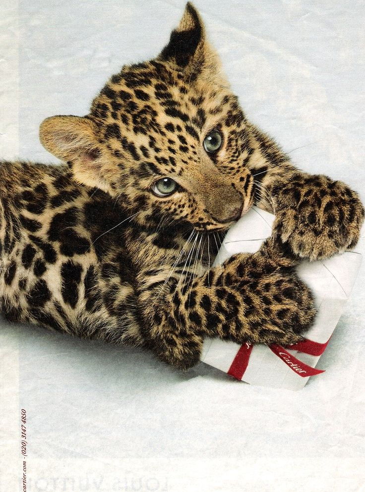cartier baby leopard gift - Google Search