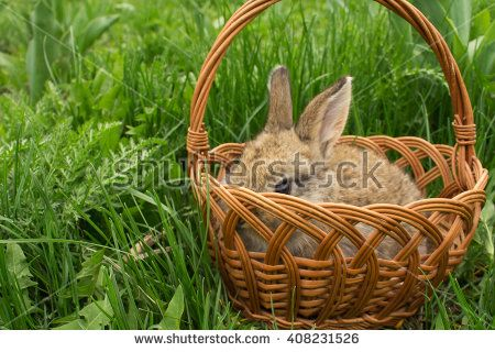 Grey small rabbit baby in a basket on the green grass. Soft focus - stock photo