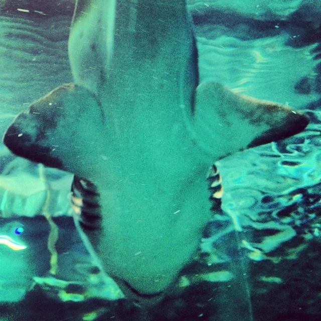 Flyby shark