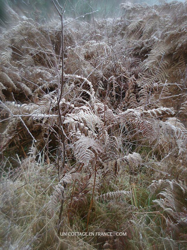 Le Chemin de Confolens en hiver 8