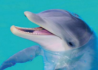Dolphin Emotions - Swimming with dolphins at the Zoomarine - Portugal's famous animal and marine park.