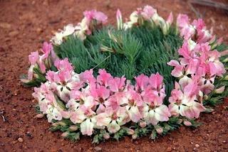 Pink Wreath: Pink Wreath