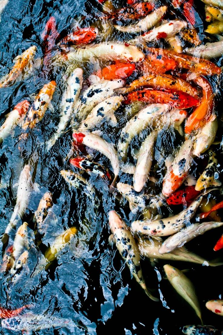Felix murillo lleno de colores painting acrylic artwork fish art - Goldfish