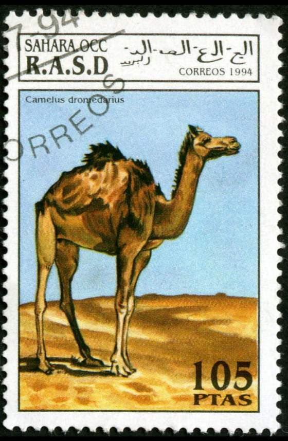 DROMEDÁRIO - mamífero camelídeo com 1 ÚNICA CORCOVA no dorso, muito utilizado como animal de carga na Arábia e em África.