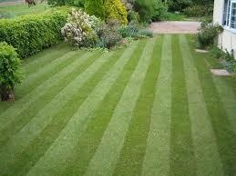 Lush Lawns based in Kent provide excellent Lawn and Garden maintence.