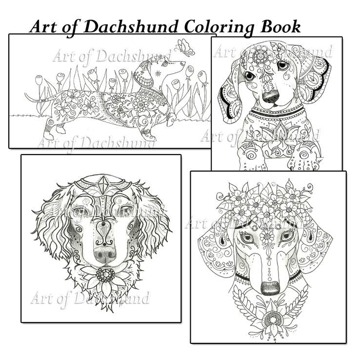 16 best dachshund coloring pages images on pinterest