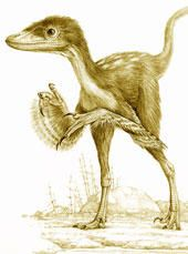 Evidence suggests that one group of dinosaurs survived the mass extinction 65.5 million years ago and can be found all over the world today. These avian theropod dinosaurs are modern birds.  and Tyrannosaurus rex and birds.  We will explore paleontological evidence found in the fossil record that shows shared anatomical characteristics and behaviors between birds and extinct theropods.