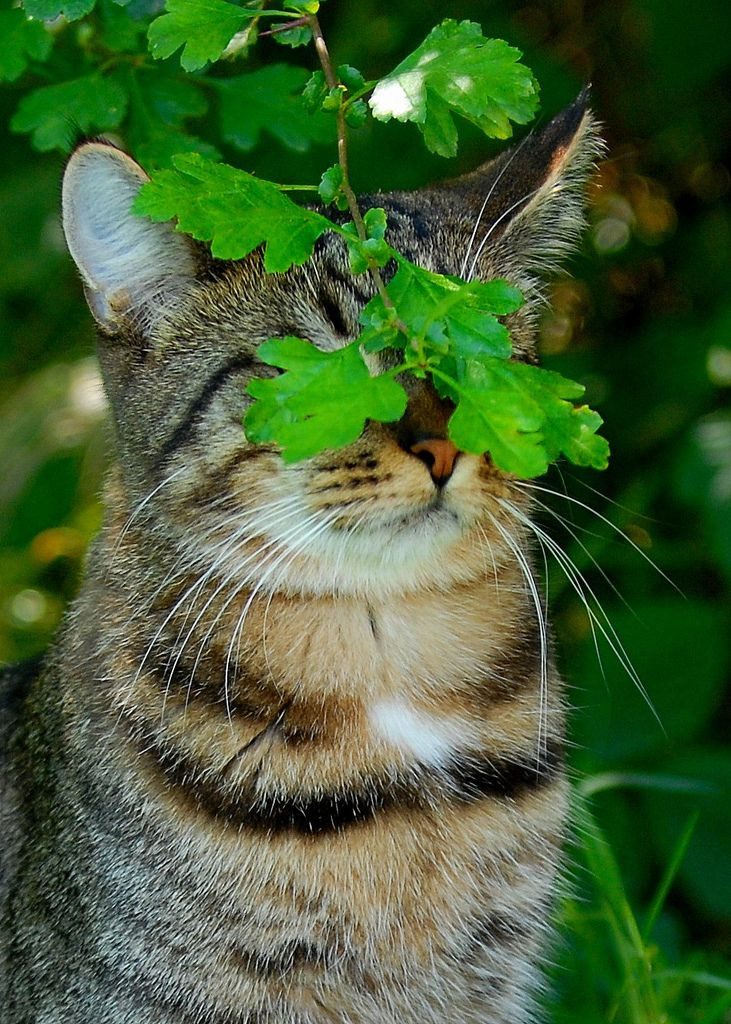 Behold the jungle cat, completely hidden from his prey. ...