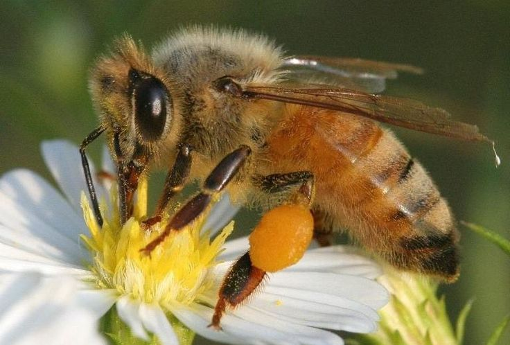 We are a locally owned humane bee removal and relocation service. Our chemical free bee removal methods are safe for your family and pets and doesn't harm the bees! Unlike typical extermination services East Texas Bee Removal doesn't use poison to kill the bees. We don't feel that just because they picked a bad location to establish their colony that it should be a death sentence! We use several different processes to remove and relocate the entire honey bee colony to our apiaries (bee…