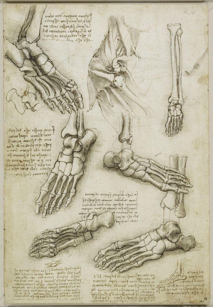 Leonardo da Vinci (Vinci 1452-Amboise 1519) - Recto: The bones of the foot, and the shoulder. Verso: The veins and muscles of the arm