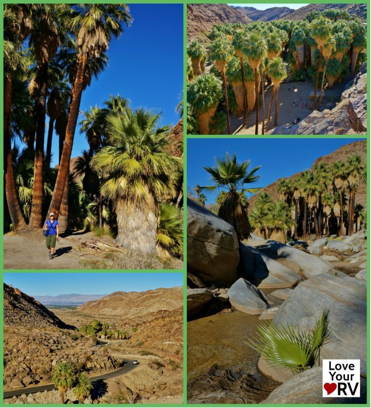 We have visited the Palm Springs area several times now and heard about a beautiful canyon loaded with Palm trees, an oasis in the dry rocky surrounding desert. We usually stay at Palm Springs Thousand Trails RV park located at the eastern end of the Coachella Valley so it is actually a 40 minute drive or so to get to the Palm Canyon Trail.  http://www.loveyourrv.com/hiking-palm-canyon-trail-palm-springs-california/  #PalmSprings #HIking #Trail