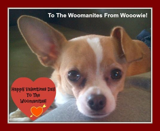 Happy Valentine's Day from Louie!