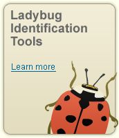 The Lost Ladybug Project is a citizen science project going on all over the country. Kids can search, identify, and post pictures of ladybugs in your own backyard.