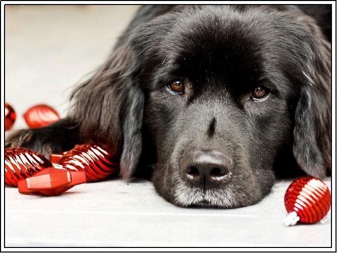 4 Dog Puppy Newfoundland Greeting Notecards/ Envelopes Set. $6.99, via Etsy.