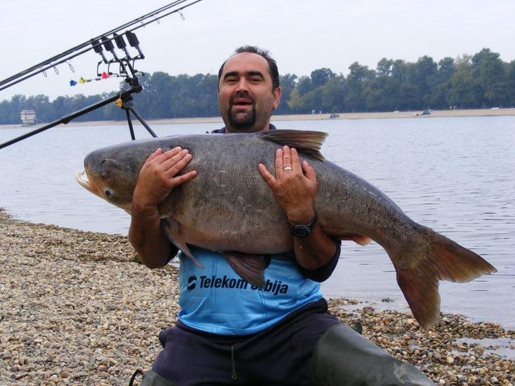 Pescuitul la novac