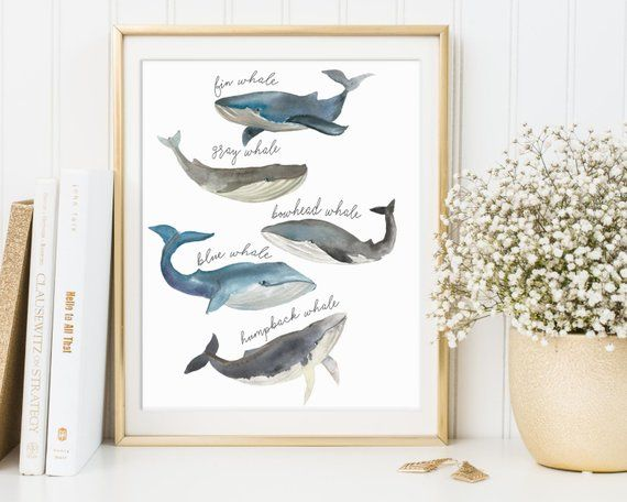 Whale Print Species Watercolor Whales
