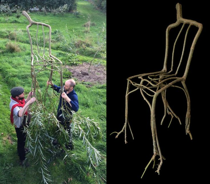 Designer Grows Trees as Artistic Furniture Straight From the Ground