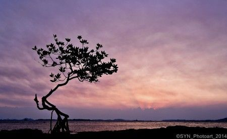 Alone mangrove at silent twilight