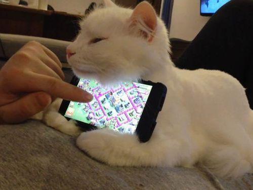 「お腹の上の猫は、スマホスタンドにすると便利なことがわかった」(動画):らばQ