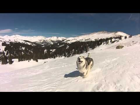 I Take My Wolfdog On Epic Adventures Because I Hate To See Dogs Locked Away   Bored Panda
