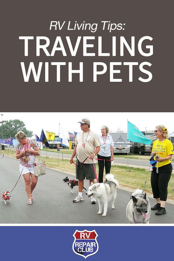 Traveling With Pets In Your Rv Things To Consider Rving Pet