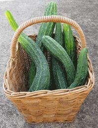 Organic Vegetable Seeds Online - Corn to Cucumber
