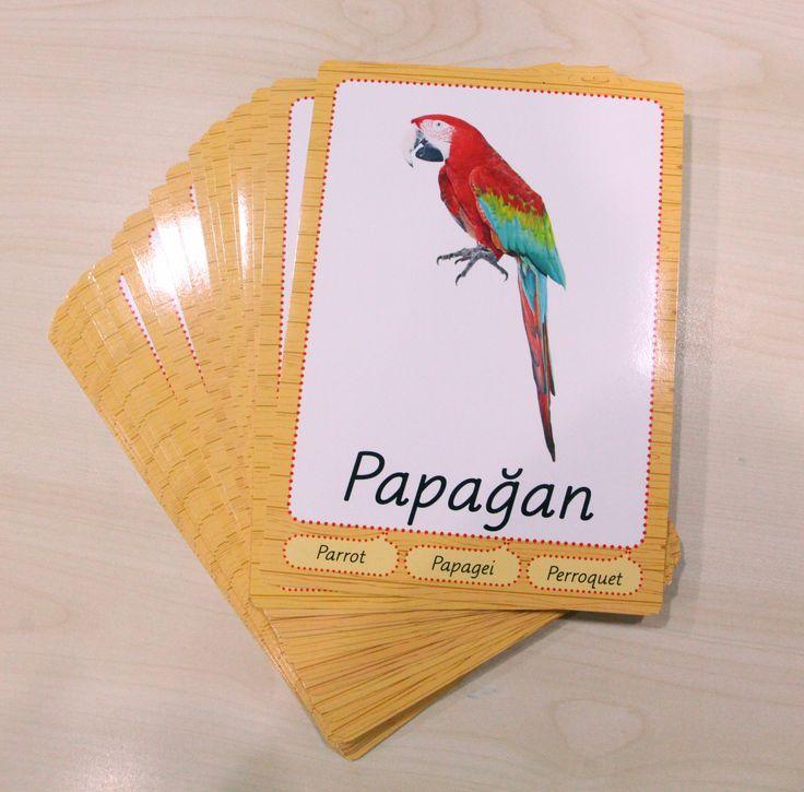 Multibem Hayvan Kartları-Papağan #parrot #parrotfish #papagan #kus #bird #multibem #afis #cocuk #education #egitim #anaokulu #kindergarden #okuloncesi #okul #yayin #yayincilik #basim #kitap #book #danismanlık #consulting