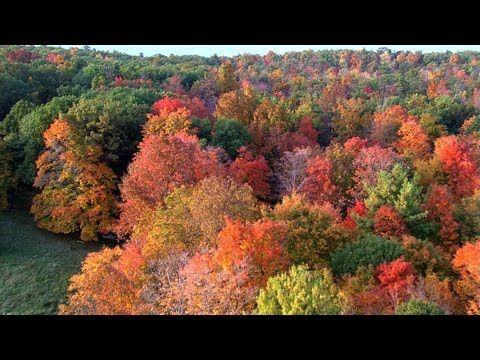 1000 Images About Gatlinburg Tn Great Smokey Mountains