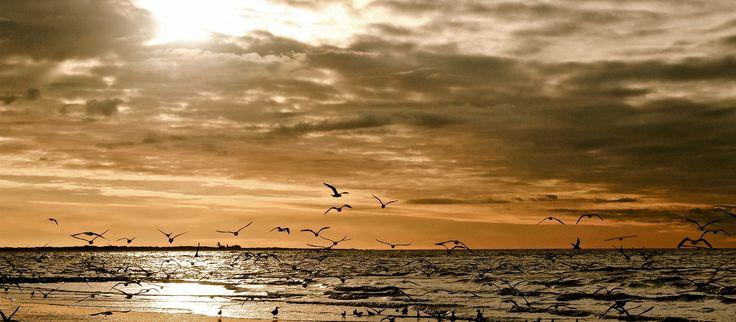 """Gehen Sie unter die Entdecker  Erkunden Sie das Wrack des gestrandeten Muschelbaggers """"Capella"""" am Ostende von Norderney. Mit etwas Glück können Sie bei Ihrem Ausflug in den Inselosten auch den ein oder anderen Seehund im Wasser sichten. Halten Sie Ihre Kamera auf jeden Fall bereit – wir freuen uns schon auf Ihre Bilder und Erzählungen."""