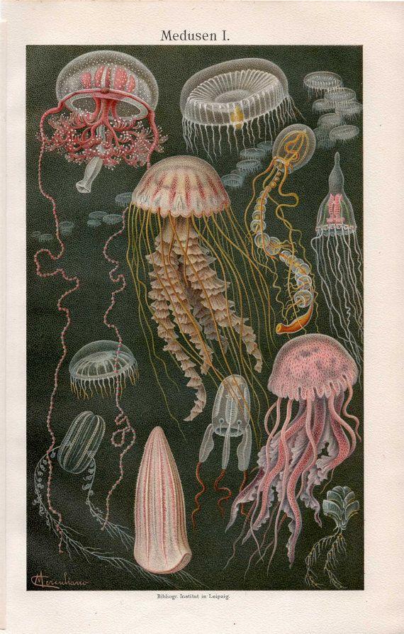 1889 jellyfish scene medusa ocean original sea antique print