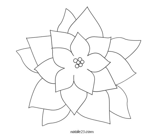 stella-natale-fiore