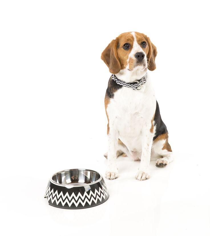 FuzzYard OKOK Easy Feeder Pet Bowl