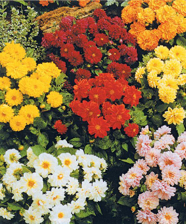 #flores y mas flores