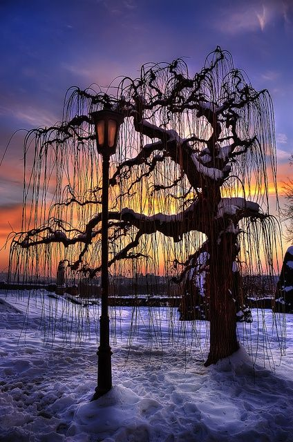 Sunset Tree, Belgrade, Serbia -->take out lamp post and emphasize slouching limbs