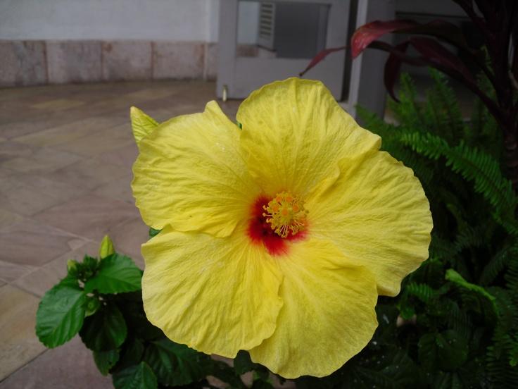 The Big Island: The Big Island, Roots Fbi, Hawaii Perfect Vacations, Big Islands