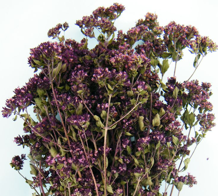 Dried marjoram herb flowers grown in the UK, from daisyshop.co.uk