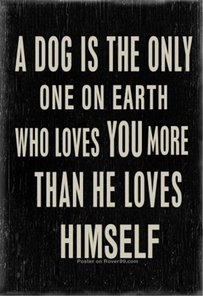 30+ Best Heart-melting Dog Quotes with Beautiful Images