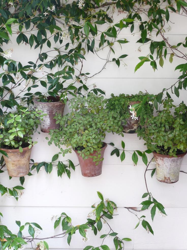 Hang pots on the wall!: Gardens Ideas, Plants Displays, Gardens Inspiration, Inspiration Ideas, Wall Plants, Hung, Gardens Outdoor, Hanging Pots,  Flowerpot
